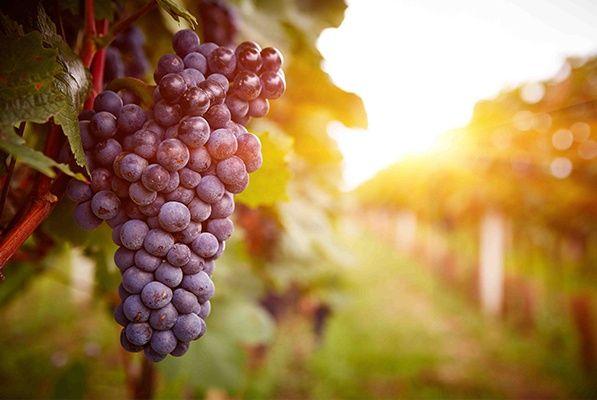 creation site internet domaine viticole