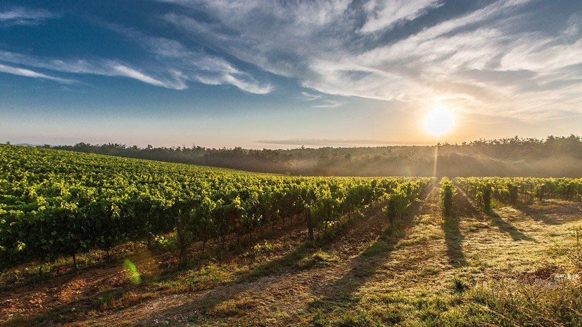 creation site internet vin