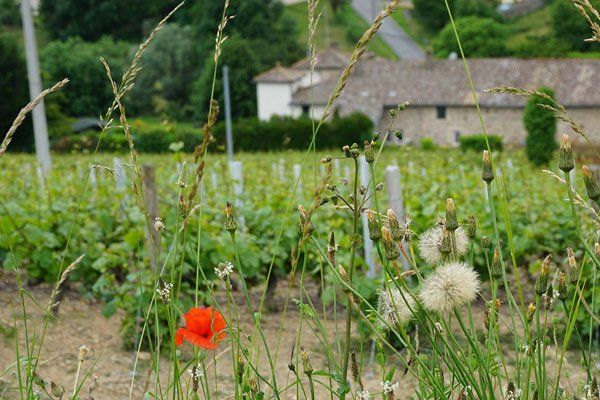 conception site internet vignoble beaujolais
