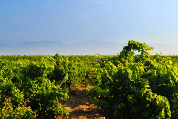creation graphique depliant domaine viticole