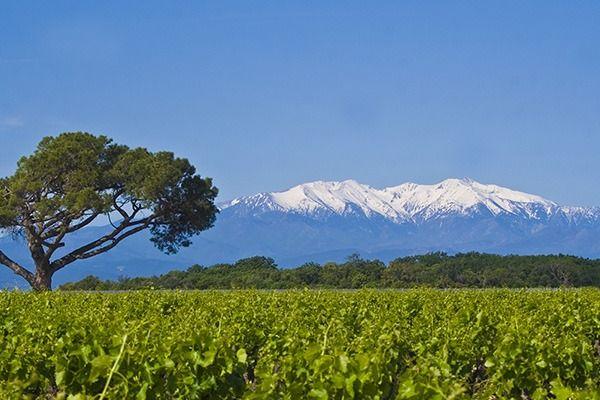 vin canet-en-roussillon