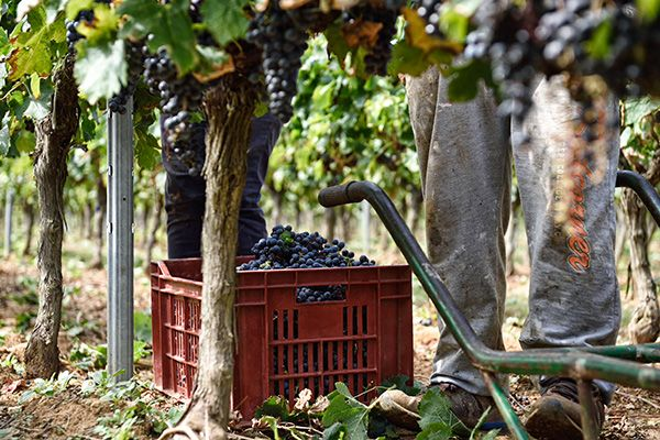creation depliant vins montpellier