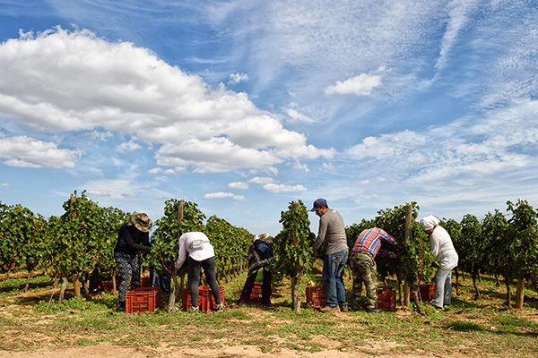 impression plaquette vins languedoc