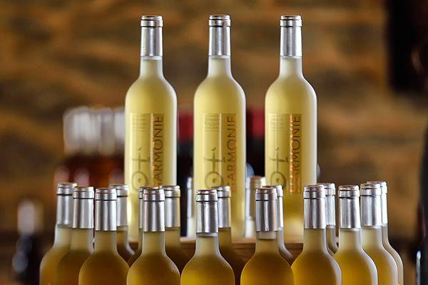 realisation plaquette vins languedoc
