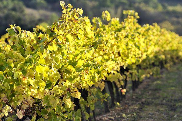 agence internet vins languedoc