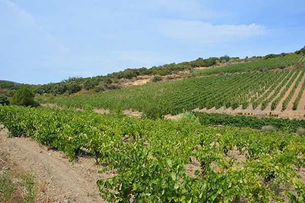 agence web domaine viticole